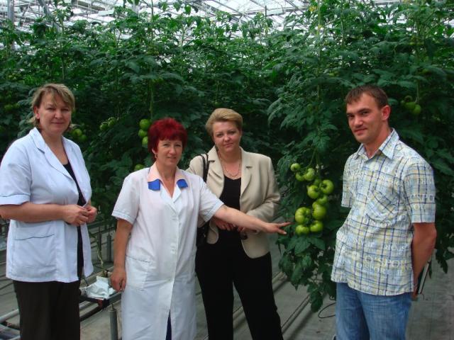 Агрономы на фоне великолепных томатов
