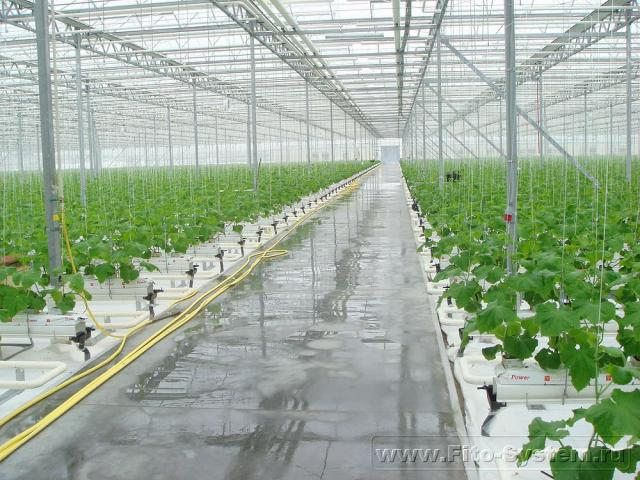 Блок выращивания огурца
